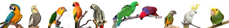 ParrotTypes