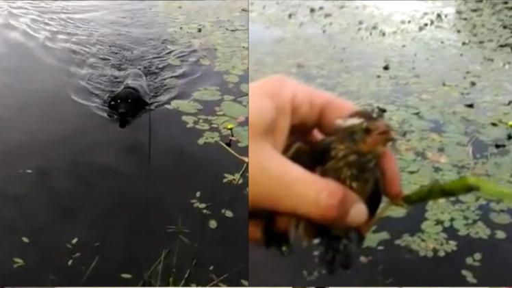 Hero dog saves baby bird in lake