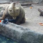 Killer bear saves drowning bird