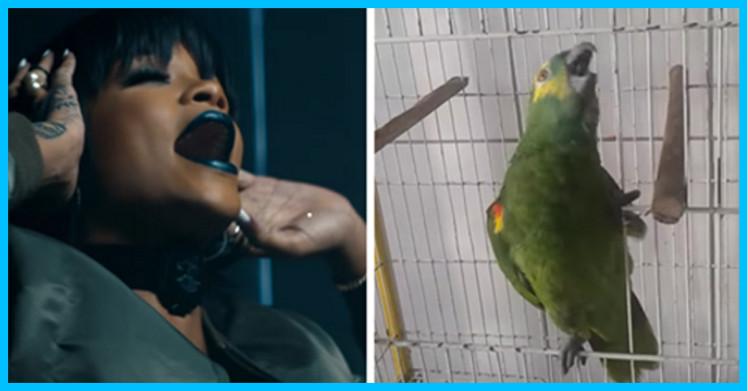 rihana parrot