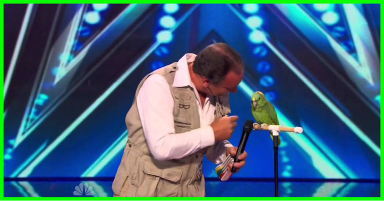 Americas Got Talent S09E06 Joe the Birdman  Tika Talking Bird Act