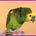 LONGEST PARROT SONG Take Me Out To The Ball Game
